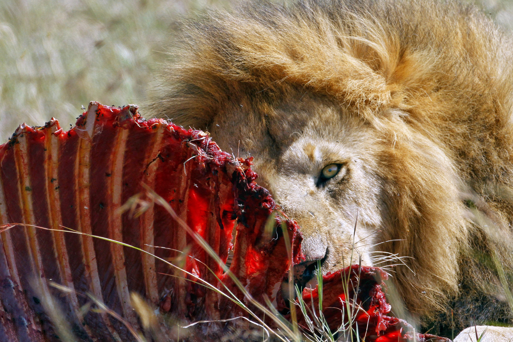 Are You a Lion or a Leper? How to Rise Above the Battle of Optics vs Action